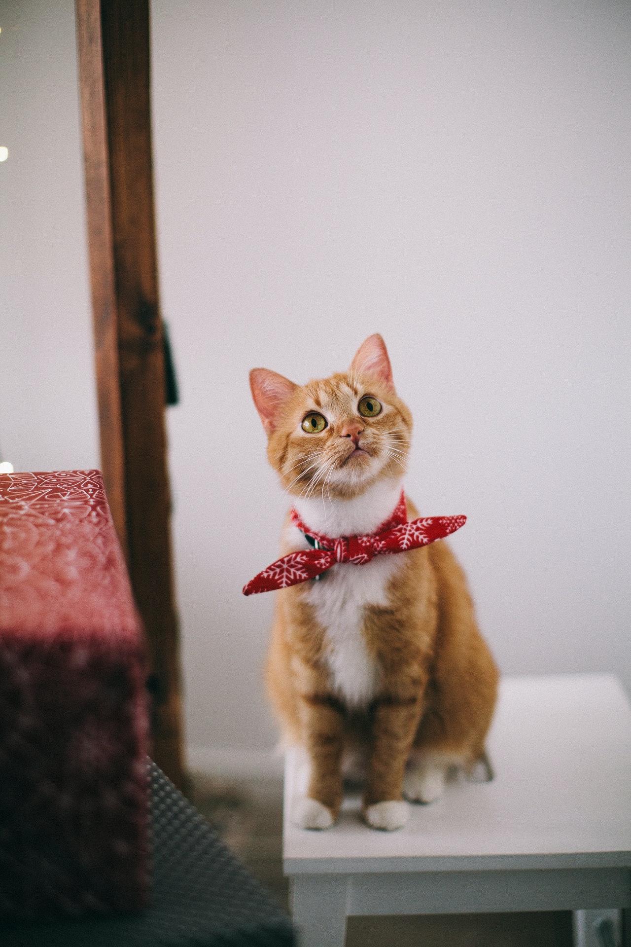 上門寵物美容有什麼好處,方便嗎?